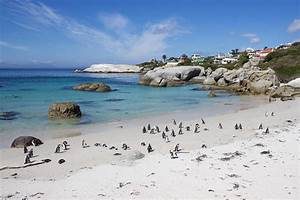 Boulders Beach Penguin Colony In South Africa Photograph
