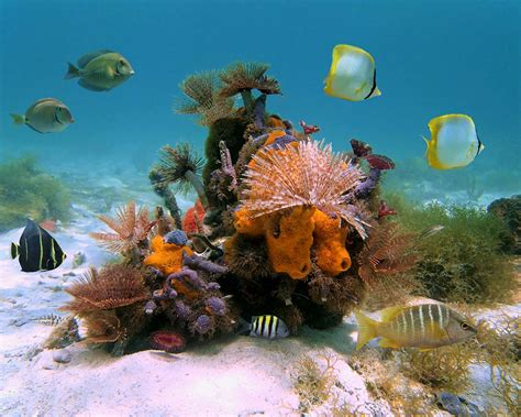Best Dive Spots In The Caribbean by The Best Diving Destinations In The Caribbean For Families