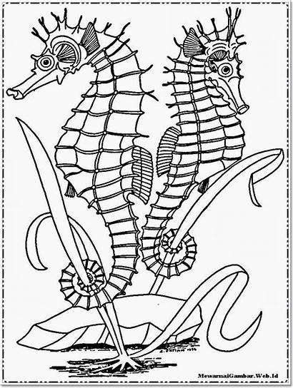 Coloring Ocean Laut Gambar Mewarnai Animal Printable