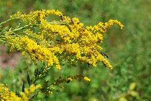 Types of Pollen Allergies, Pollen Counts and their ...