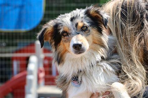 benefits  dog daycare  daycare    dog