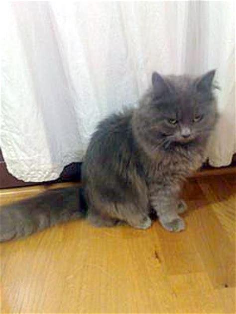 cat breed   cat