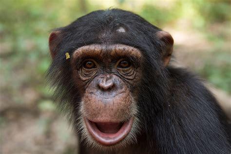 great apes  spot    false beliefs