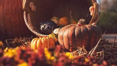 Harvest Pumpkin Autumn Straw Basket 4k Fall