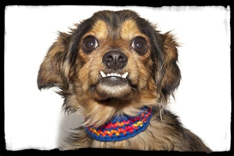 ONE FUNNY TERRIER A DOZEN NEWBIES THE SHELTER