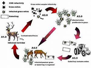 Mites Alimentaires Cycle De Reproduction : fig 1 ~ Dailycaller-alerts.com Idées de Décoration