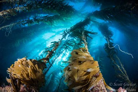 underwater lensesunderwater photography guide