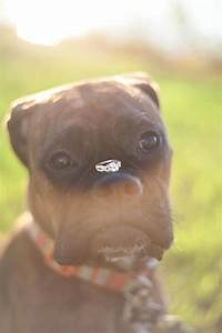 dog delivers rings at wedding 10 stylish eve With dog wedding ring