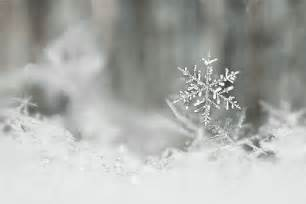 Snow Flakes Tattoo