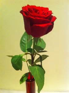Good Morning Love Rose Flowers