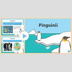 * New * Pinguinii  Prezentare Powerpoint  Pinguini, Prezentare, Antarctica