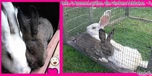 Hortensien überwintern Im Keller : berwintern im keller kaninchen ~ Lizthompson.info Haus und Dekorationen