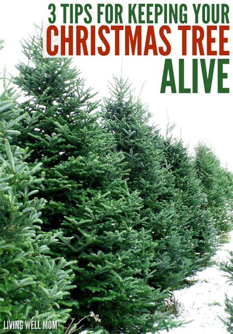 christmas tree alive  simple tips
