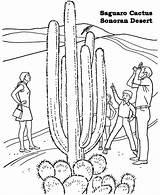 Desert Coloring Pages Cactus Sonoran Saguaro National Printable Barrel Racing Monuments Print Preschool Drawing Colouring Habitat Arizona Mojave Biome Go sketch template
