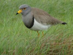 Birding2asia. Birdwatching report from a birding trip to ...
