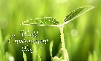Environment Plants Trees Protect Dp Wallpapers Whatsapp