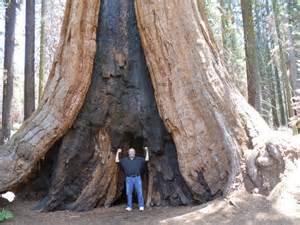 Giant Sequoia National Park