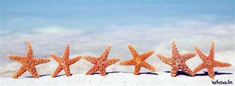 star fish facbook cover