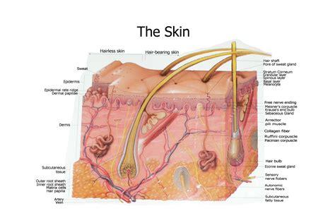 skin diagram books worth reading pinterest diagram