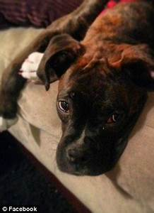 He's one lucky dog! Boxer puppy named Jack Dempsey found ...