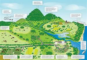 Riparian Corridor Diagram