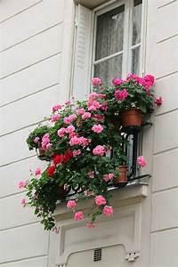 Comment Remplir Une Grande Jardinière : les plus beaux fleurs de balcon en 47 images ~ Melissatoandfro.com Idées de Décoration