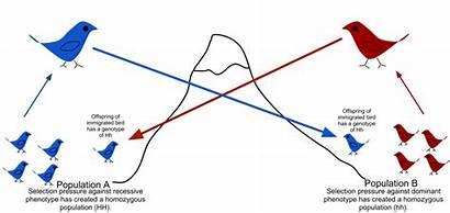 Gene Flow Wikipedia