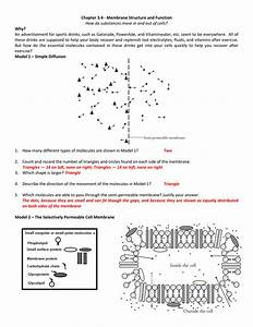 Membrane Structure And Function Worksheet Answers