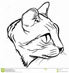 Cat Face Illustration | Cat face draw design by ...