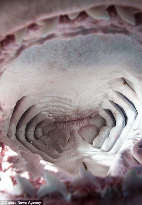 Zemūdene.: Kā izskatās haizivs rīklē
