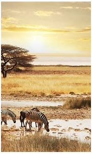Safari Wallpapers - Wallpaper Cave