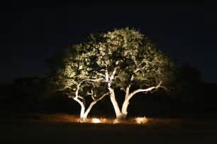 tree lighting expert outdoor lighting advice