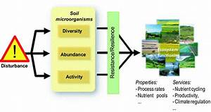 The response of the soil ecosystem to disturbance is ...