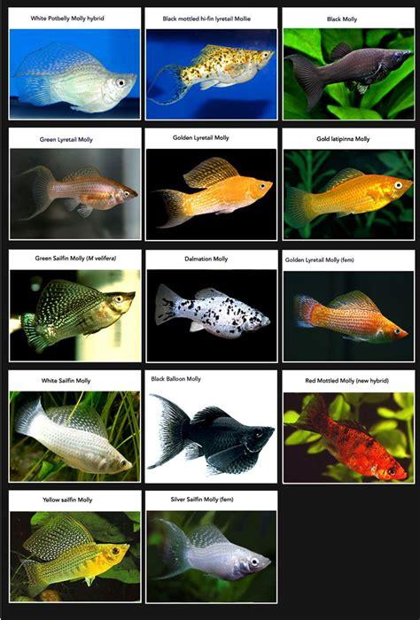 aquarium fish names  pictures   aquarium ideas