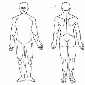 Trigger Point Referred Chart Human Body Diagram Blank Human Body Diagram Body