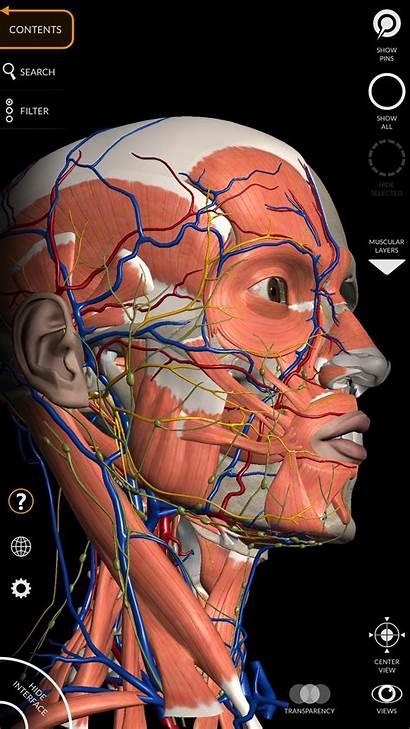 Anatomy Atlas Atlante Anatomia Internet Apk Apkpure