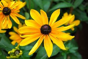 Flowers For Flower Lovers Yellow Flowers Wallpapers ...