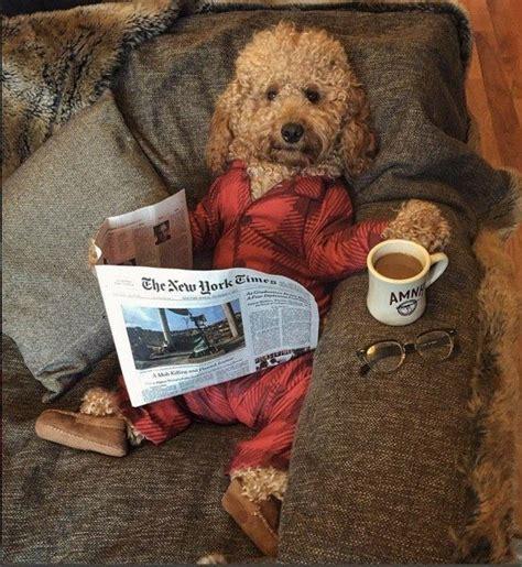 york times print edition   week depending