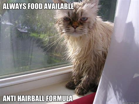 Fancy Cat Meme - fancy cat problems memes quickmeme
