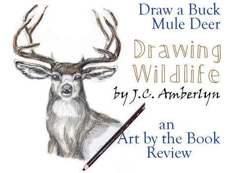 Draw A Buck Mule Deer  Drawing Wildlife Book Review Art