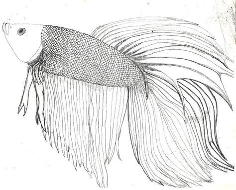 draw  betta google search animals fish