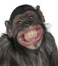 Funny Animals Laughing