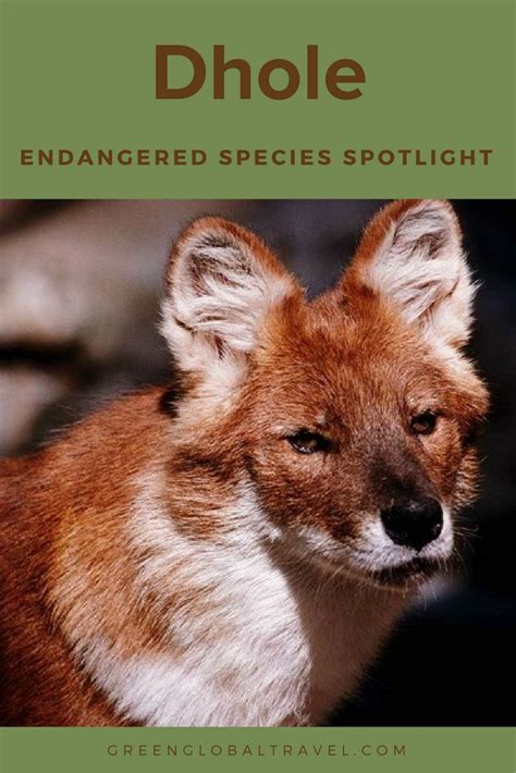 wildlife conservation images  pinterest