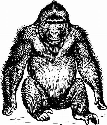 Ape Clip Onlinelabels