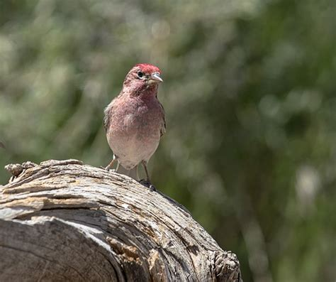re weekly wildlife thread may 28th june 3rd