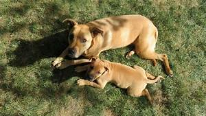 how to introduce a new puppy to your older dog the dog With how to introduce a new puppy to your dog