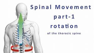 Moving Your Spine