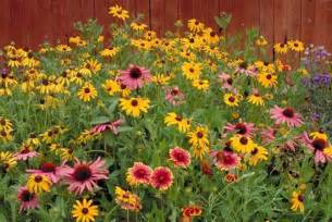 1/4 LB, BULK, Wildflower Mix Seeds, Cover a Large Area, Attracts Butterflies