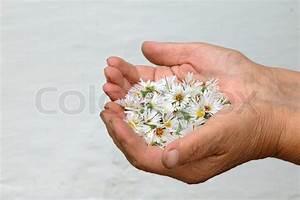 Blumen In Der Box : bild von wei en blumen in der handfl che stockfoto colourbox ~ Orissabook.com Haus und Dekorationen