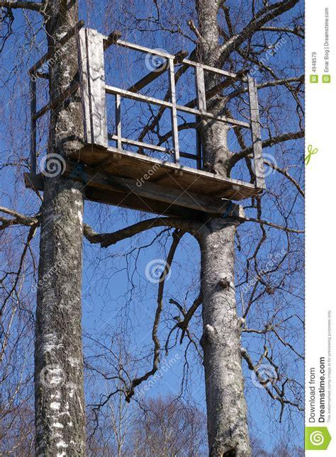 tree stand  birch trees stock image image  tree genus